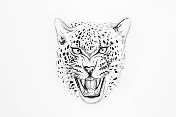 Sketch of a jaguar on white background.