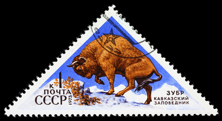 "USSR - CIRCA 1973: Postage stamp of the series ""Fauna - Nature Reserves"" with a picture of Bison, printed in USSR, circa 1973"