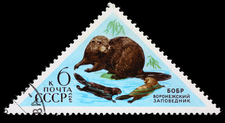 "USSR - CIRCA 1973: Postage stamp of the series ""Fauna - Nature Reserves"" with a picture of Beaver, printed in USSR, circa 1973"