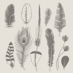 Feathers collection. Vintage design set. Hand-drawn illustration