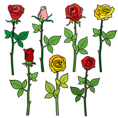 Red vector roses with flower buds isolated on white. Cartoon illustration