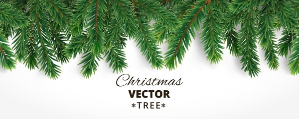 Banner with vector christmas tree branches and space for text. R