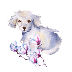White dog with flower. isolated. watercolor illustration.