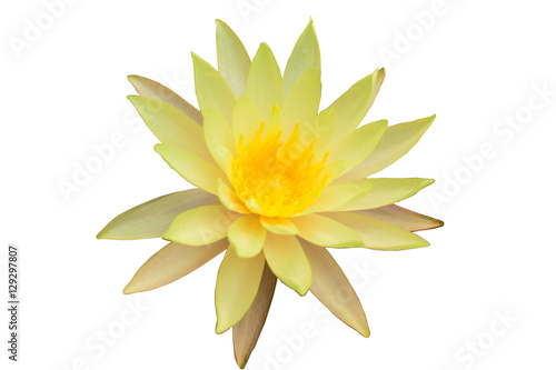 Beautiful Yellow Lotus Flower Stock Photo And Royalty Free Images