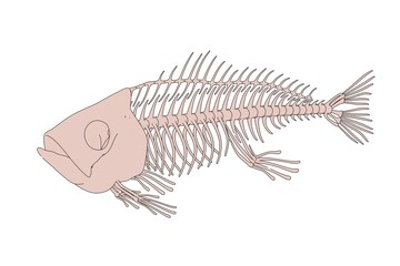 2d cartoon illustration of fish skeleton