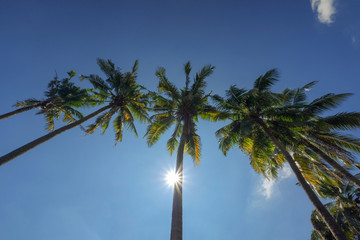 tops of the palm trees against the blue sky