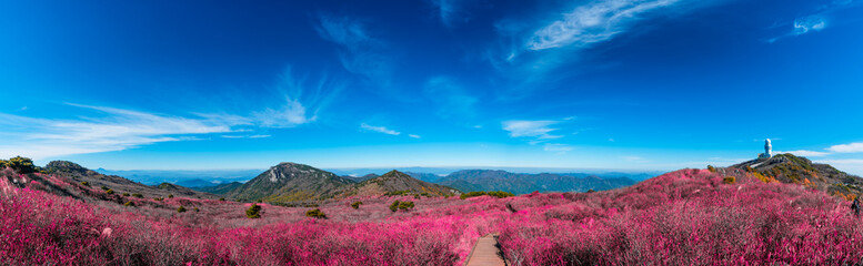 Papiers peints Grenat Biseulsan National Recreation Forest The best Image of landscape Mountain flower and autumn in South Korea.
