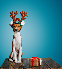 Serious cute little dog wearing reindeer antlers sits next to a present wrapped in craft paper with red bow isolated on blue