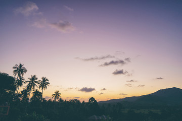 Beautiful tropical sunset with silhoette of palm trees.