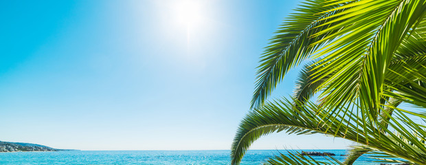 palm tree by the shore in Laguna Beach