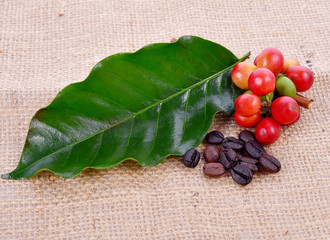 Wall Mural - Coffee beans and leaves on sackcloth background