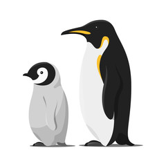 Vector cartoon style illustration of penguins.