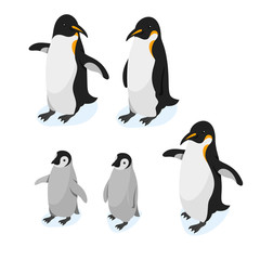 Isometric 3d vector realistic style set of penguins.