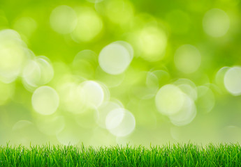 Panorama of grass with green bokeh