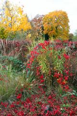 Bäume und Sträucher im Herbst.4