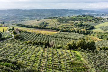 Olive plantation in landscape in Tuscany, Italy, seen from above
