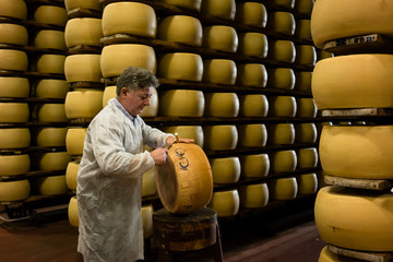 Experienced worker in cheese factory testing quality of parmesan