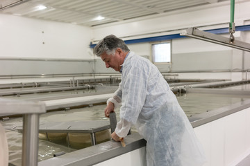 Man turning fresh cheese loafs in brim working at food factory