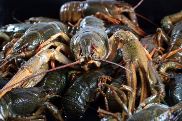 wonderful freshly caught crayfish as a trophy for a successful fishing foods