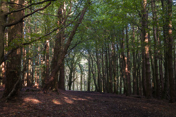 Dappled autumnal sunlight through the trees in Gisburn Forest, Lancashire, England.