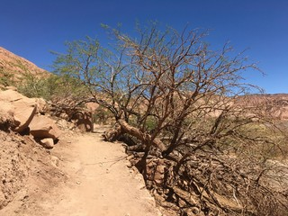 Atacama Desert trees in Chile