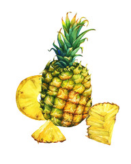 Arrangement with whole and slice pineapple. Hand drawn watercolor painting on white background.