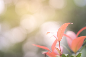 Blurred red leaves with copy space using as background or wallpa
