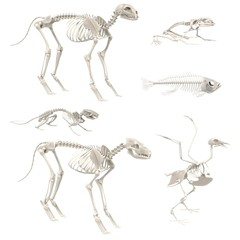 realistic 3d render of animal skeletons