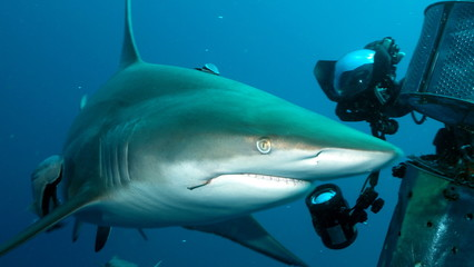 Shark proceeding towards shooting equipment