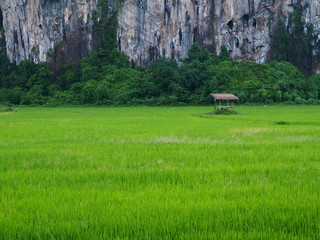 rural landscape view paddy field mountain.