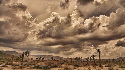 Joshua Tree Desert Storm