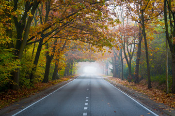 The vanishing autumn