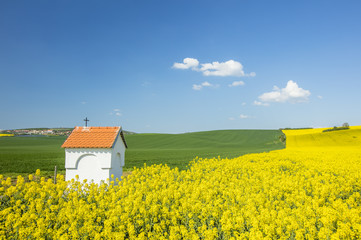 yellow rapeseed field and white chapel under sky