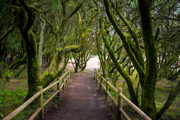 Forest at Garajonay National Park, La Gomera, Canary Islands, Spain