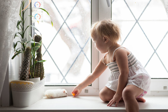 Toddler girl  play at window with  hamster, real interior, lifes