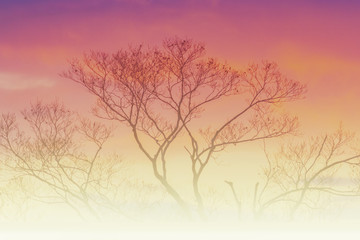 creativity background with tree and soft colors