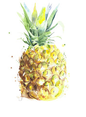Pineapple fruit handmade watercolor painting on white background