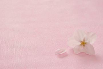 桜の花 桃色背景