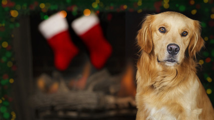 Dog In Front of Christmas Fireplace