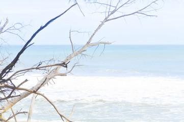sea , sky and tree