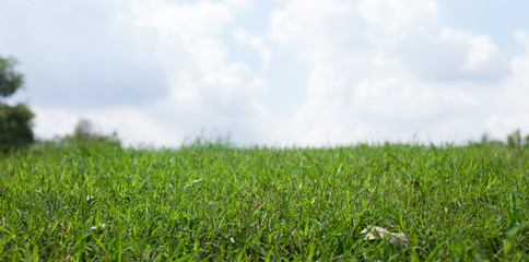 Green grass over the sky for background - with depth of field and copyspace