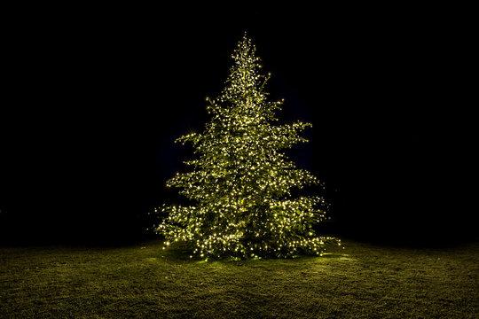 Beleuchteter Tannenbaum auf einer Wiese