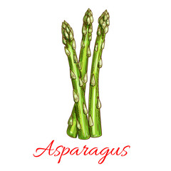 Asparagus vegetable stem isolated sketch