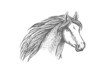 Horse head sketch of purebred arabian mare