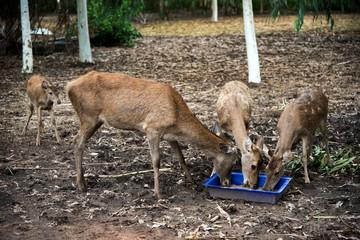 Deer in the paddock on a farm