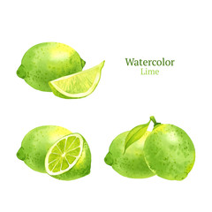 Watercolor vector lime