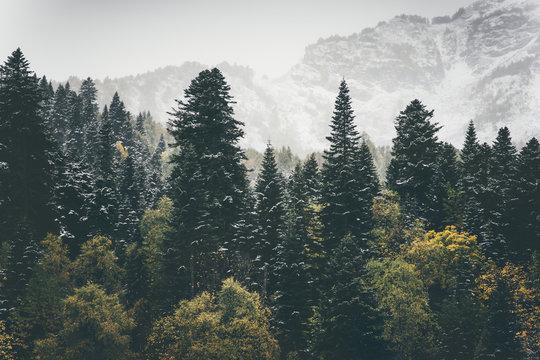 Coniferous Forest Landscape mountains on background Travel serene scenery moody weather autumn season