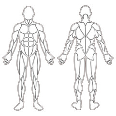 Human body muscles silhouette