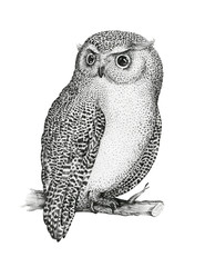 Hand drawn isolated  black white illustration owl fly bird. Trib