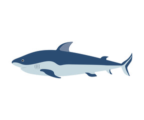 colorful silhouette with sea shark vector illustration
